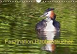 Faszination Haubentaucher (Wandkalender 2021 DIN A4 quer): Intime Einblicke in das...