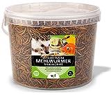 UGF - Premium Mehlwürmer getrocknet 3 Liter Eimer, Insekten Snacks für Vögel,...