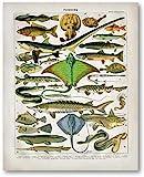 Ozean Tier Fisch Leinwand Poster Salzwasser Fisch Drucke Seepferdchen Hai...