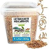 MeerBach Animal Mehlwürmer getrocknet • 5 Liter Premium Futter im Eimer • der...