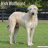 Irish Wolfhound - Irischer Wolfshund 2022 - 16-Monatskalender: Original...