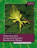 Stabschrecken, Gespenstschrecken, Wandelnde Blätter: Erfolgreiche Haltung von...