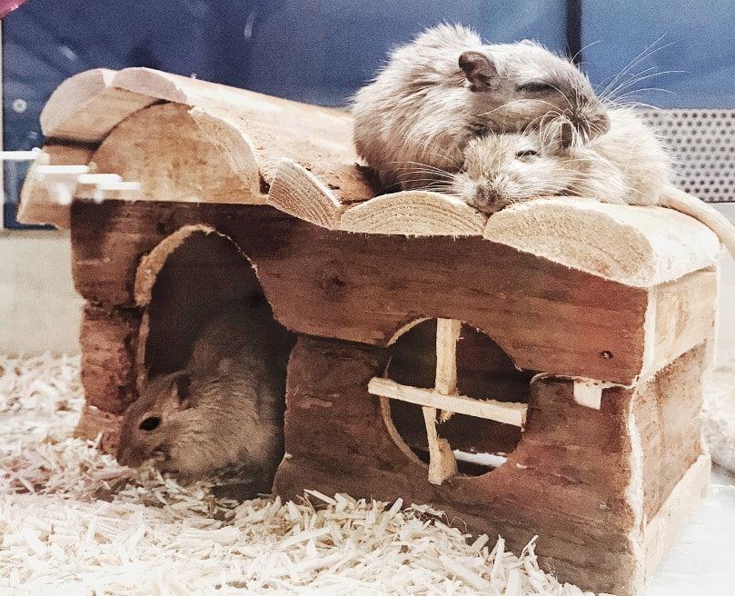 Hamster am Haus