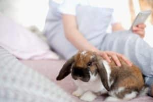 Kaninchen wird gestreichelt