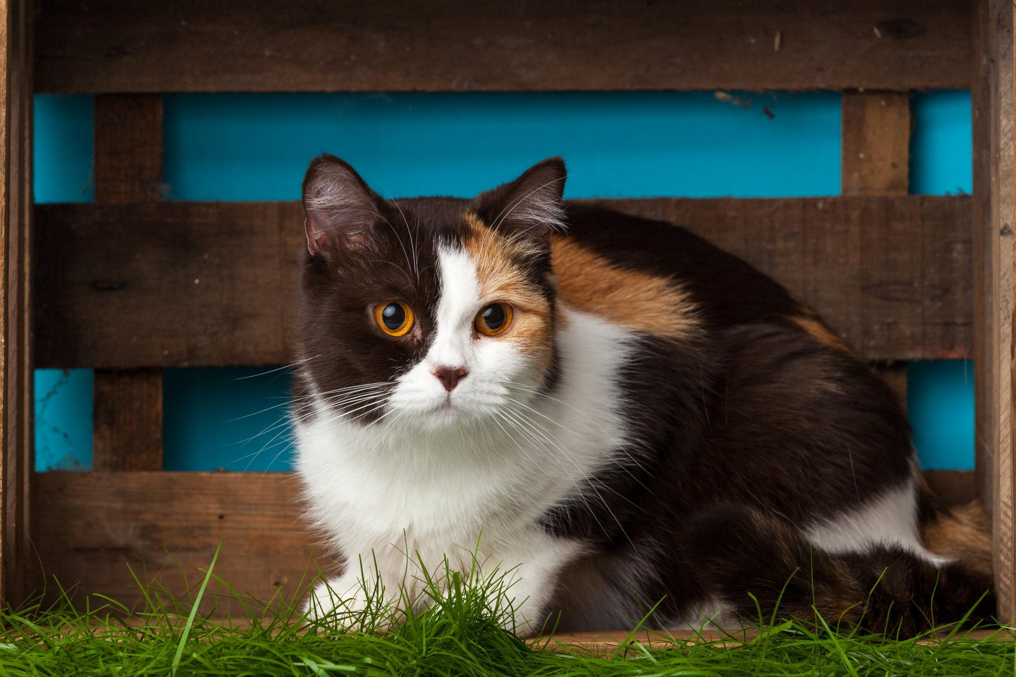 Ob diese Samtpfote wohl einen schönen Katzennamen hat?