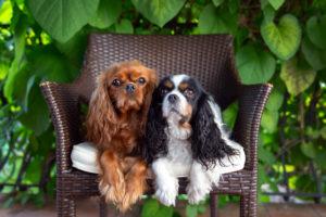 Süß oder originell, wie lautet der perfekte Hundename?
