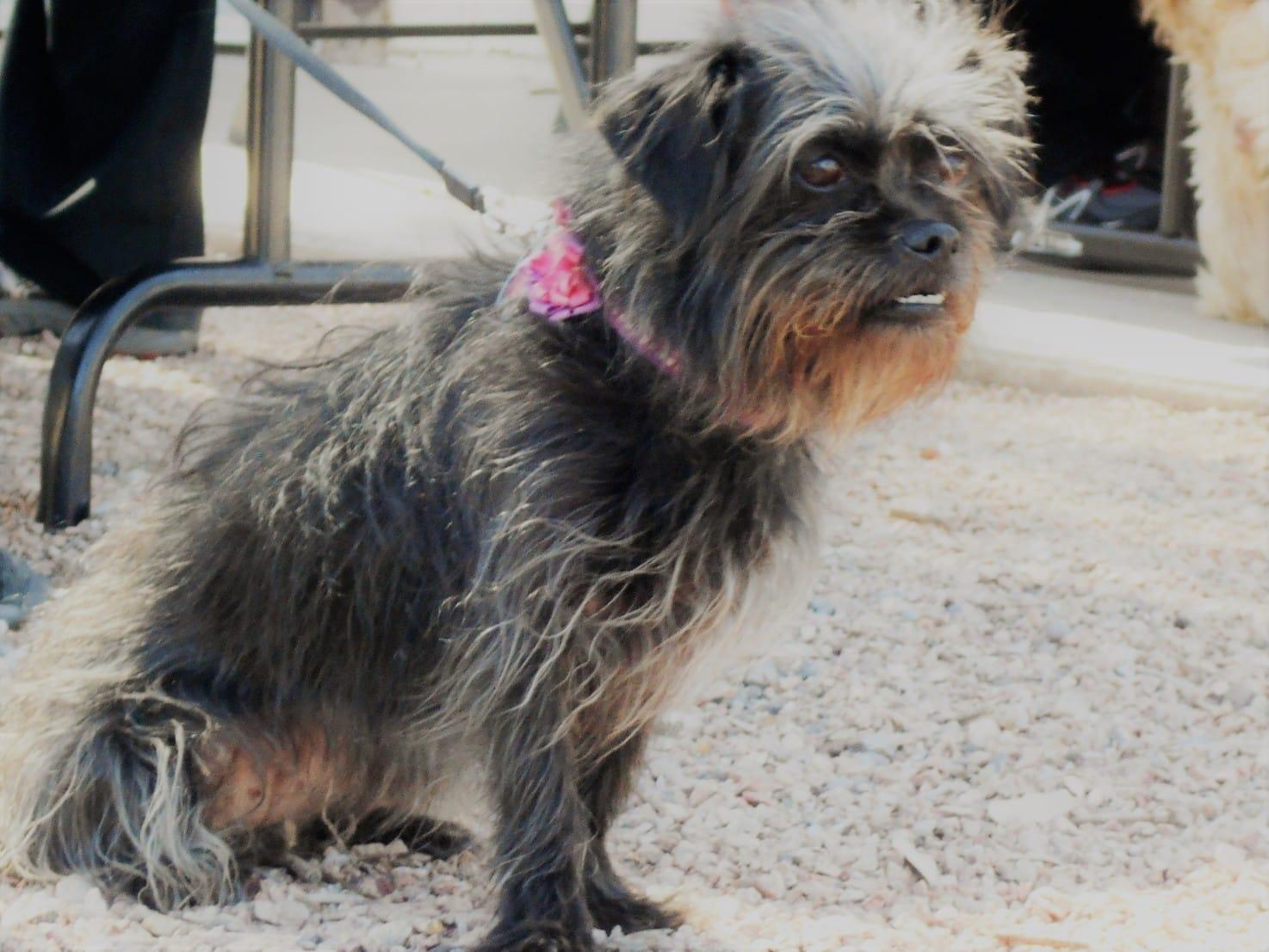 Bei langhaarigen Hunderassen ist die regelmäßige Fellpflege besonders wichtig. Foto: AZ.BLT via Twenty20